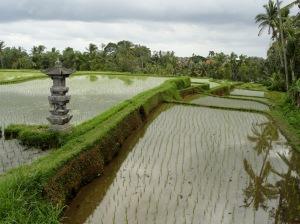 Campuhan Ridge, Ubud, Bali