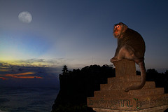Uluwatu Monkey Forest